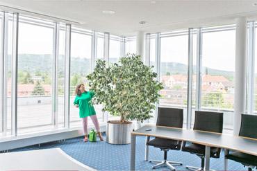 Innenraumbegrünung Büro Pflanzenpflege Kassel
