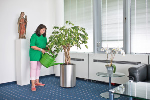 Buerobegruenung Pflanzenpflege