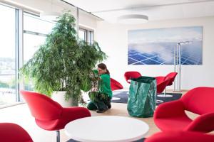 Firmen Innenraumbegruenung Pflege