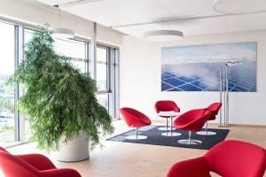 Office Greening Kassel