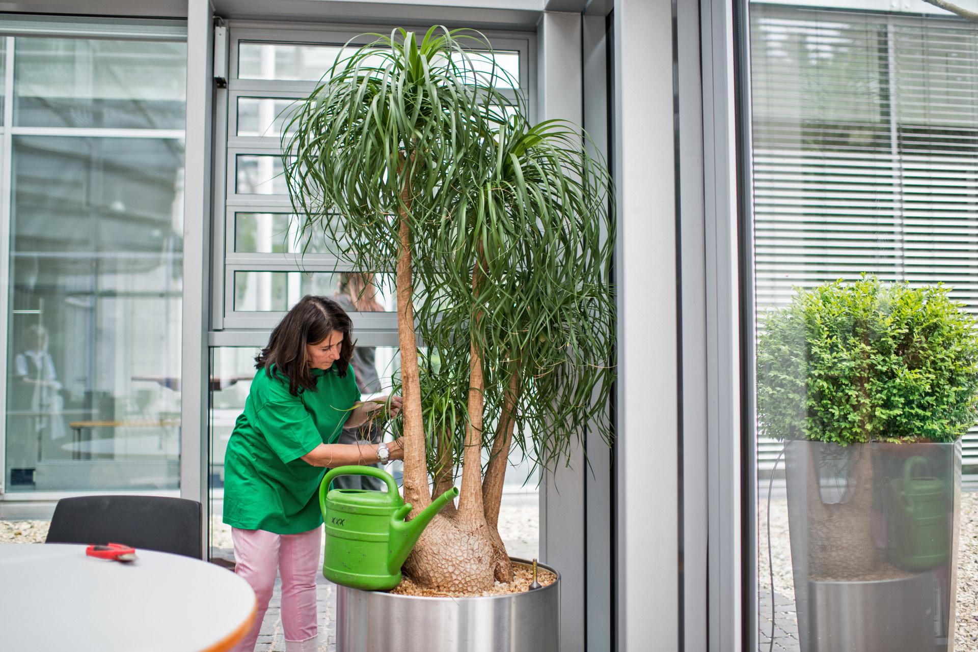 Pflanzenpflege Begruenung